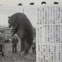 北海道で体重400キロのヒグマを駆除、「こんな巨体見たことない」